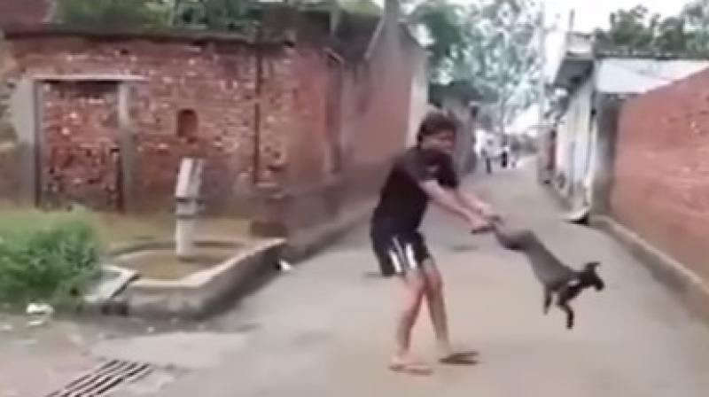 Youth spinning a dog (Photo: Video grab)