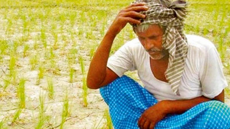 Mr Sharath Kumar said that 188 cases were rejected by the enquiry committees at the district level as they were not farm-related suicides. (Representational image)