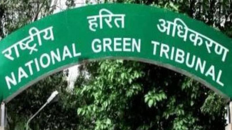 National Green Tribunal. (Photo: PTI)
