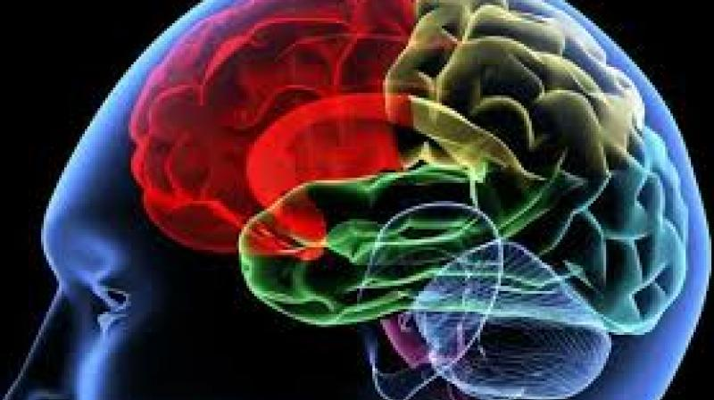 Image result for brain dead gives life to three