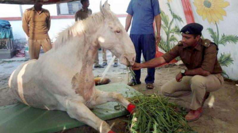 Shaktiman died earlier this month after being injured in a BJP rally.