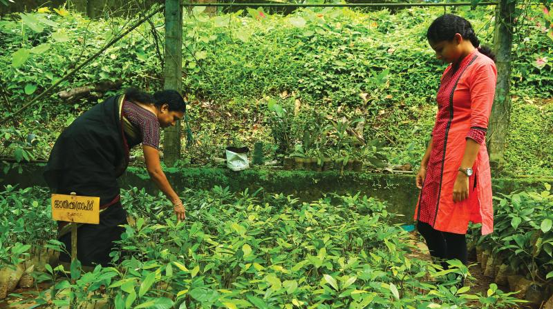 The farm is especially known for a germplasm collection of over 52 varieties of mangoes. It has produced over 200 hybrid mangoes over the years. Almost all the fruit trees, including jackfruit, sapota, rambutan, lychee and  karambola, are available here. During peak seasons,  almost 1.5 lakh saplings are  sold out from here daily.
