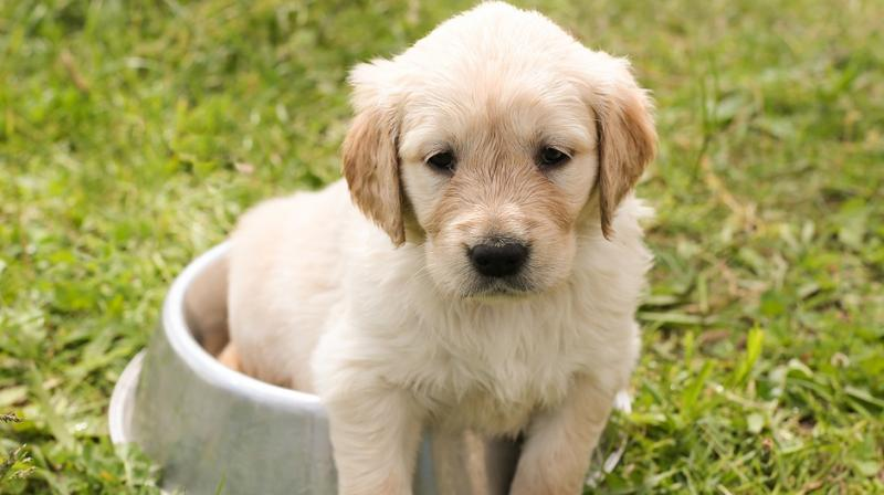Pet dogs can lower stress levels in families. (Photo: Pixabay)