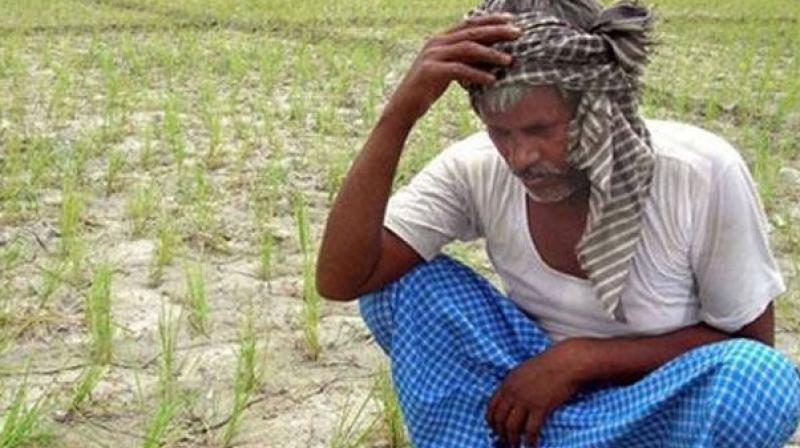 Police said on Tuesday that the farmer owns about two acres of land in the village, and the paddy seeds he sowed directly in his fields did not germinate.  (Representational image)