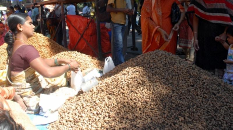 Andhra Pradesh OilFed, AP Seeds, HIL and Vasan agencies were allotted to procure groundnut seeds from other parts due to non-availability of quality seeds locally, due to massive failure of crops in the previous kharif season.   (Representational image)
