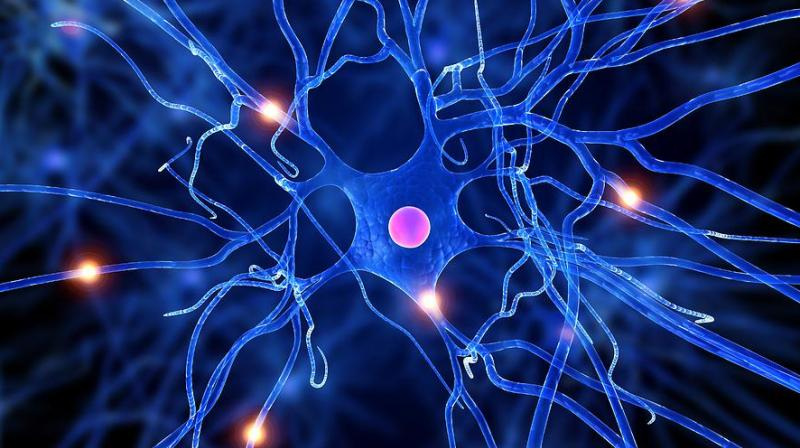 3D technology enriches nerve cells for transplants to brain