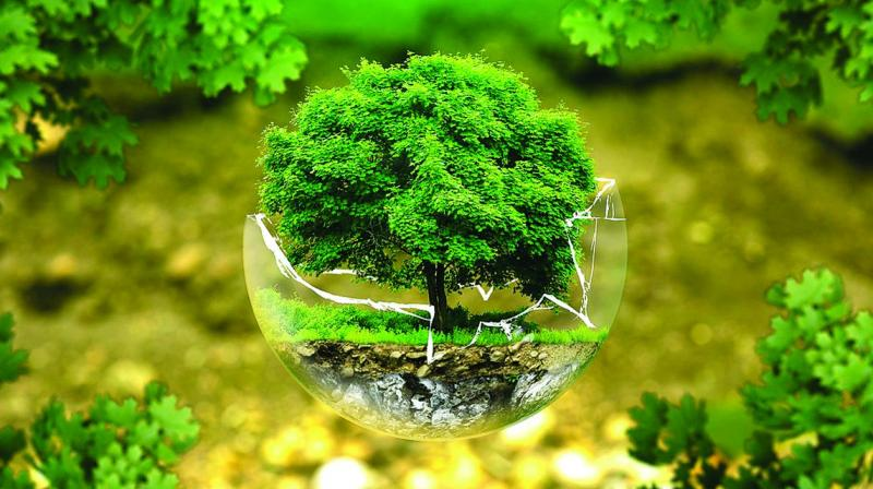 The extra tree  growth, however, will not compensate for global warming.