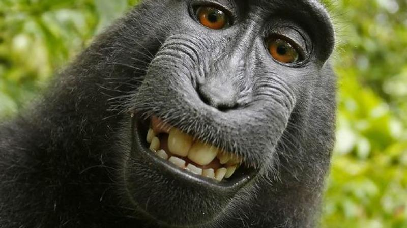 apes may guess what others are thinking study