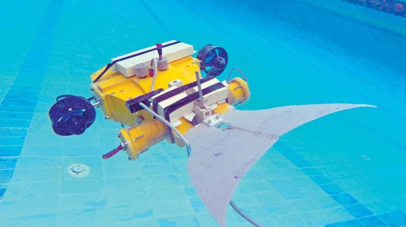 The robotic fish 'Duli' (means turtle in Sanskrit) has biologically inspired caudal (tail) fin and conventional rotary thrusters.