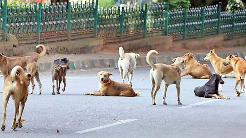 A 65-year-old woman was mauled to death by a pack of stray dogs on a suburban beach at Pulluvila.