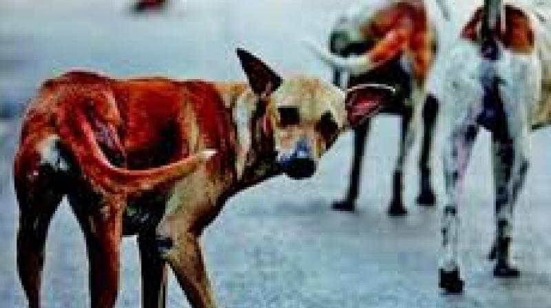 Over 1 7 crore stray dogs in India: government