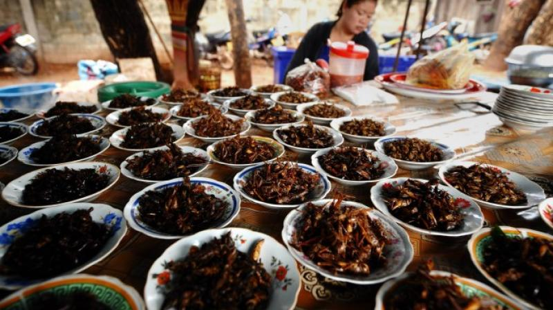 Insects can be rich in nutrients according to the U.N. Food and Agriculture Organization (FAO). (Photo: AFP)