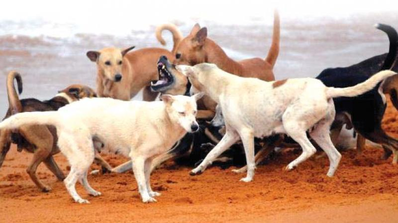 Dogs attacked the two-day old baby and started eating it. (Representational image)