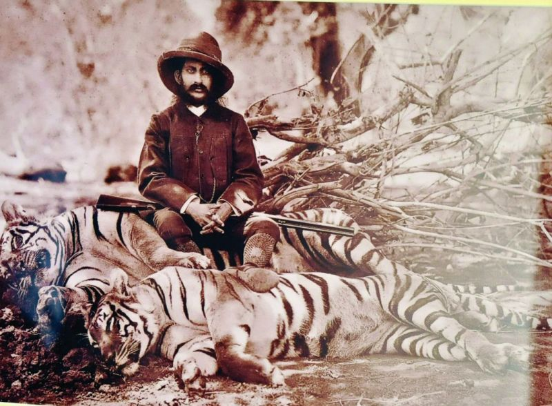 The Nawab with his bag of two tigers in Shikar Camp dated 1895.